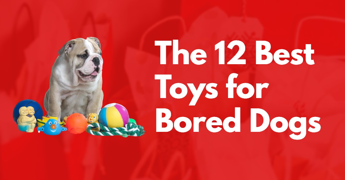 Best Toys for Bored Dogs