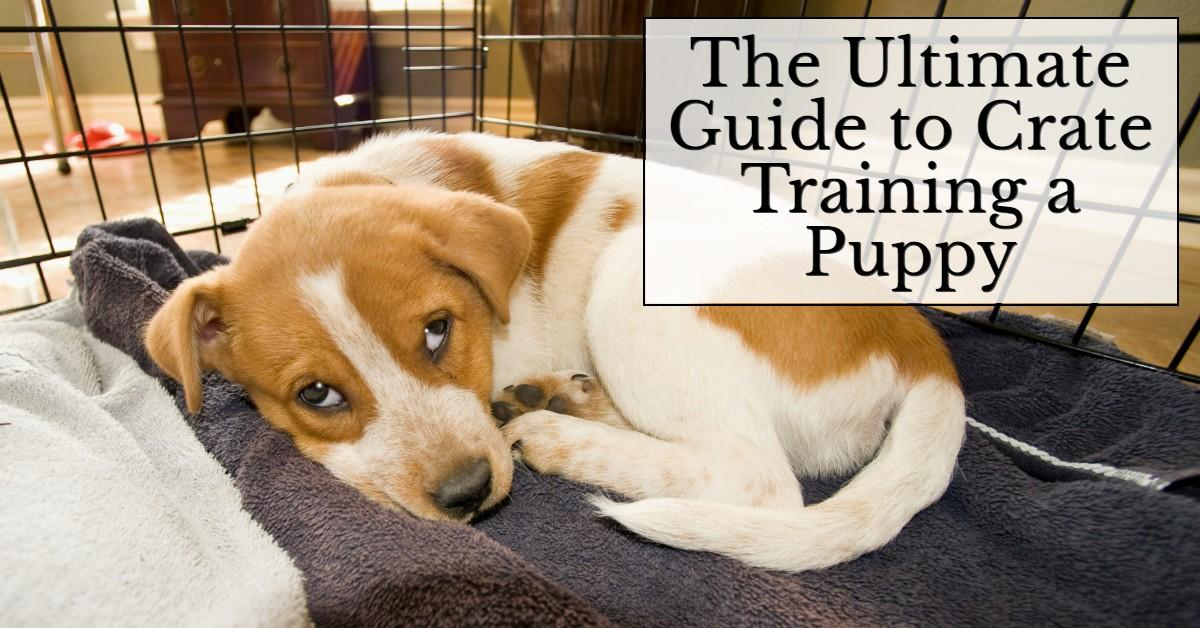 The Ultimate Guide to Crate Training a Puppy