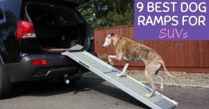 The 9 Best Dog Ramps for SUVs