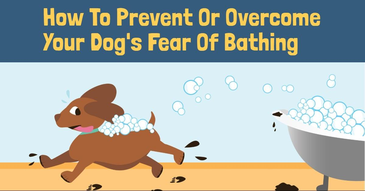 How to prevent or overcome your dog's fear of bathing