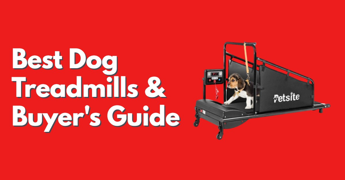 Best Dog Treadmill