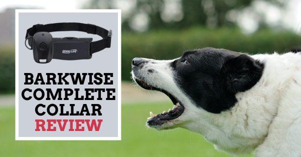 Barkwise Complete Collar Review: Is It Worth It?