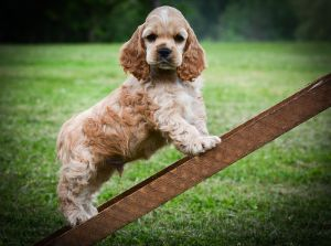 Curious dog on a wooden steps