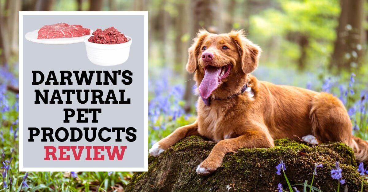 Darwin's Natural Pet Products Review
