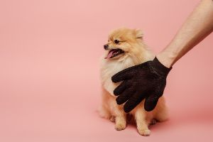 Dog Paw Cleaning Glove