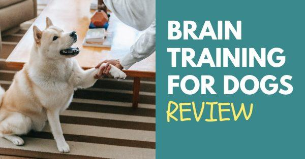 Brain Training for Dogs Review: Read Before Signing Up