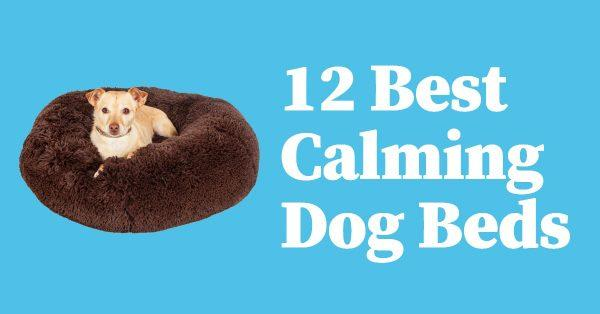 10 Best Calming Dog Beds with Buyer's Guide