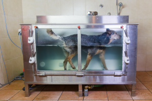 dog on hydrotherapy treadmill