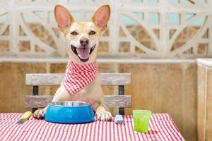 dog smiling with his meal