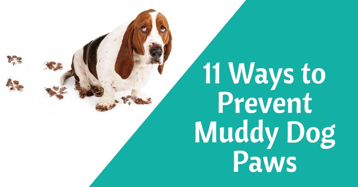 prevent-muddy-dog-paws