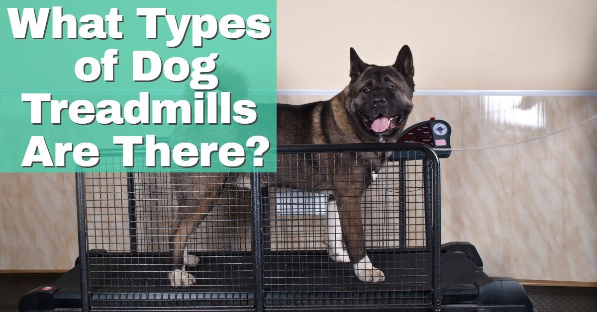 Types of dog treadmills