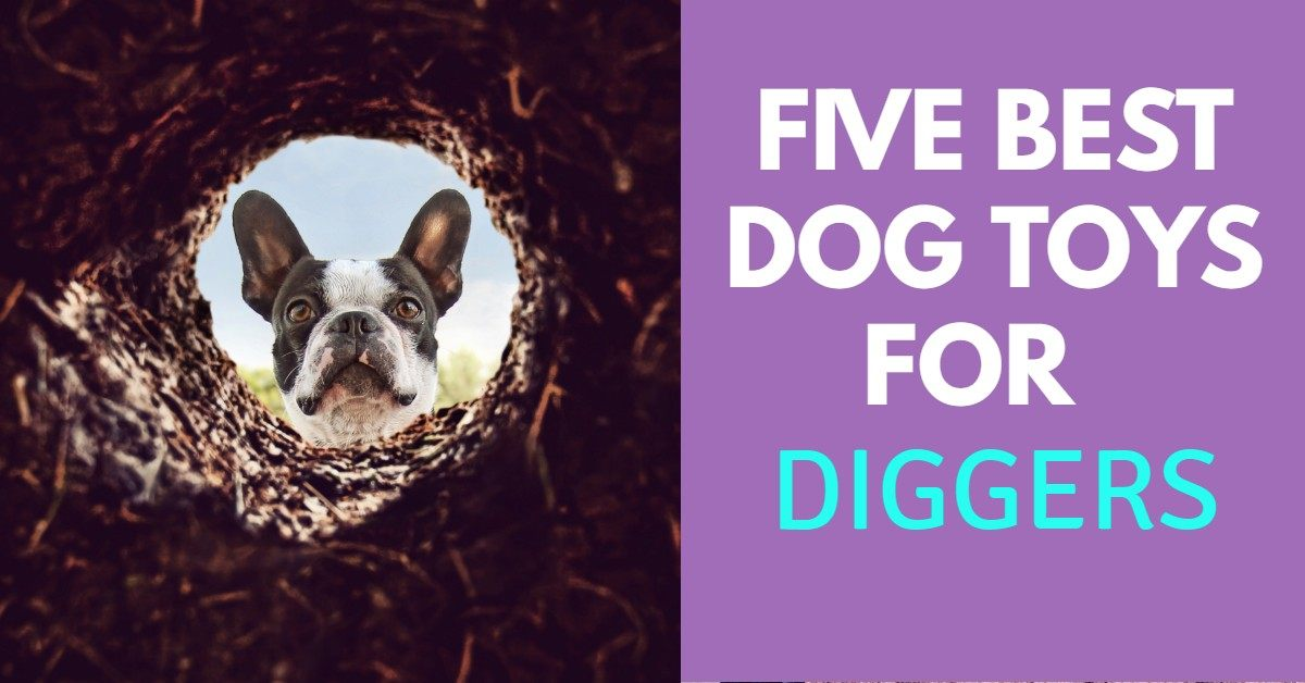 Best Dog Toys for Diggers