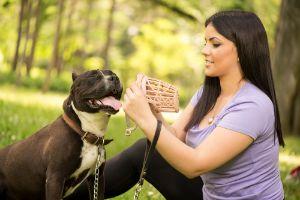 Dog muzzle training for reactive dog
