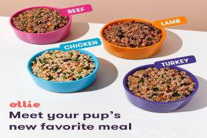Ollie dog food recipes