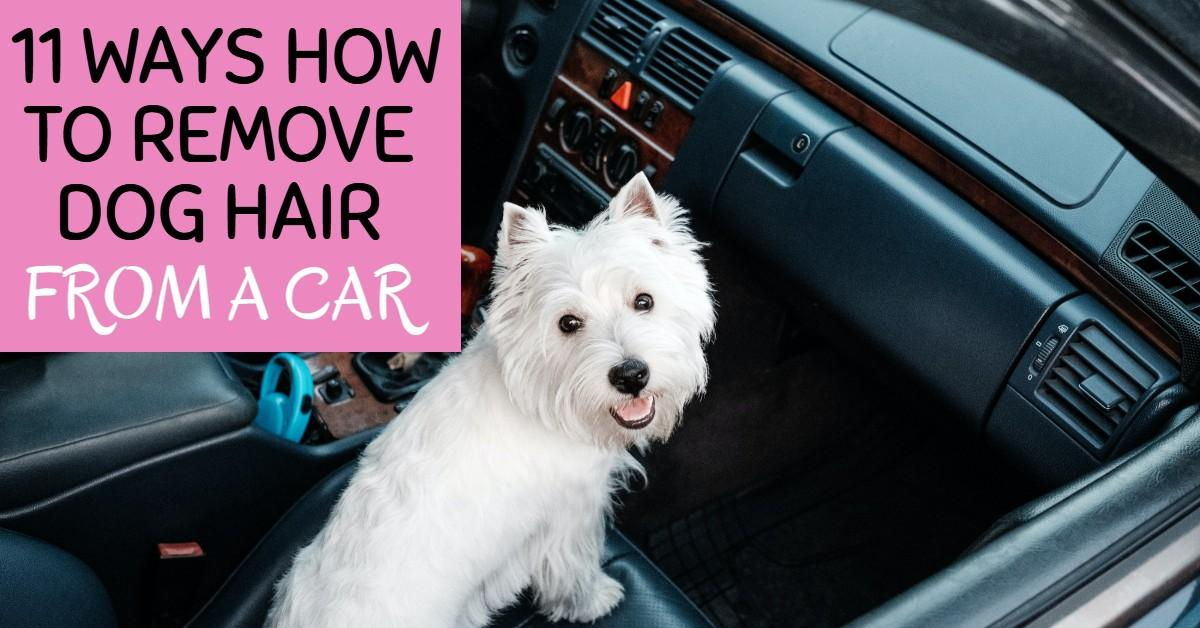 How to remove dog hair from a car