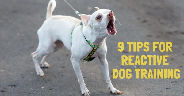 9 Tips for Reactive Dog Training