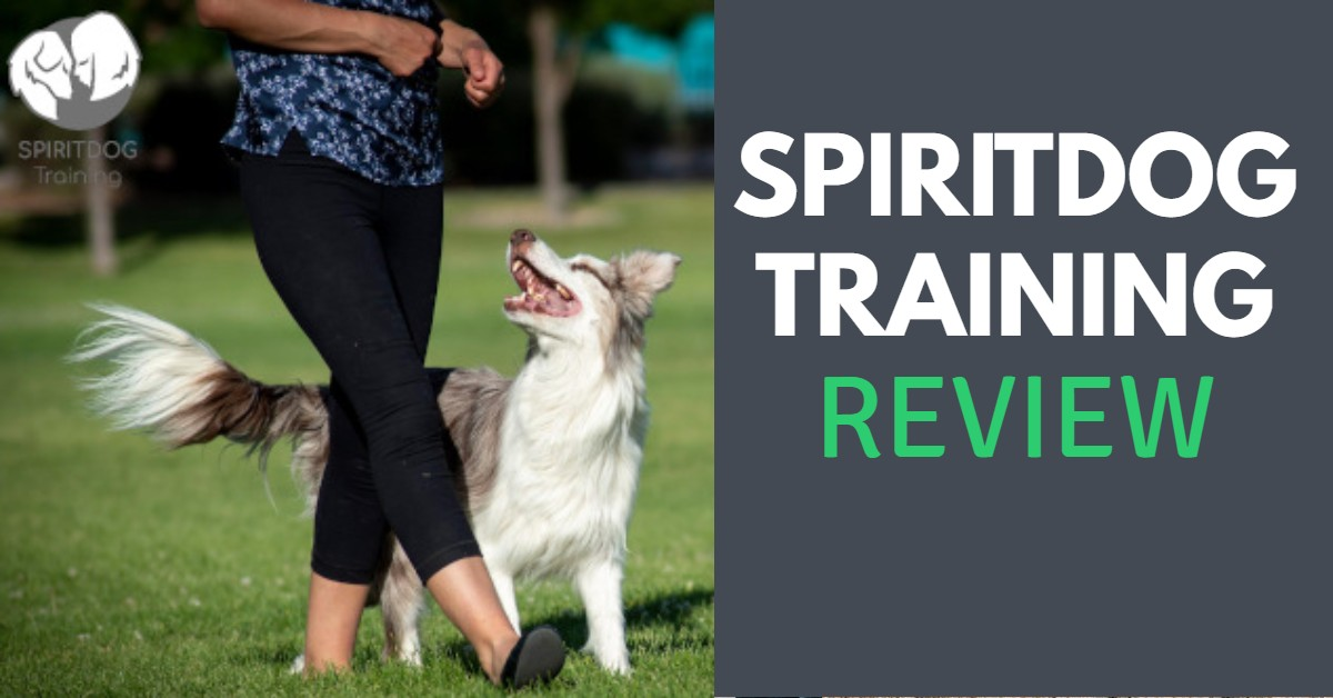 Spirit Dog Training Review