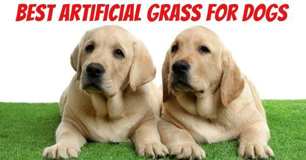 Top 5 Picks for Best Artificial Grass for Dogs
