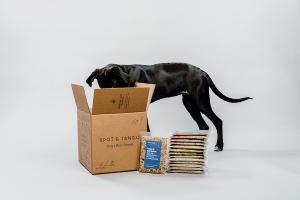Dog in Spot and Tango Box