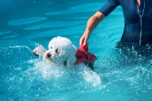 Dog swimming lessons