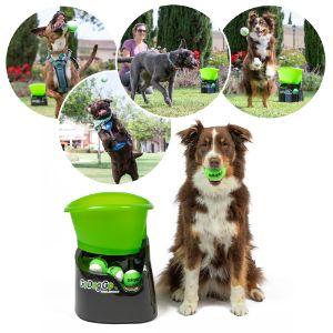 Dogs playing with GoDogGo Fetch Machine