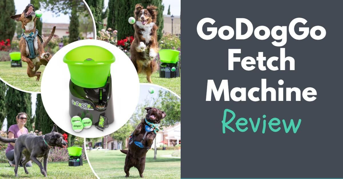 GoDogGo Fetch Machine Review