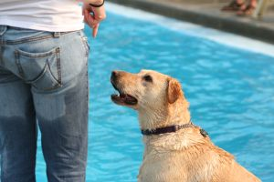 Proper Supervision of Dog while Swimming