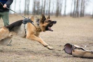 aggressive dog on leash