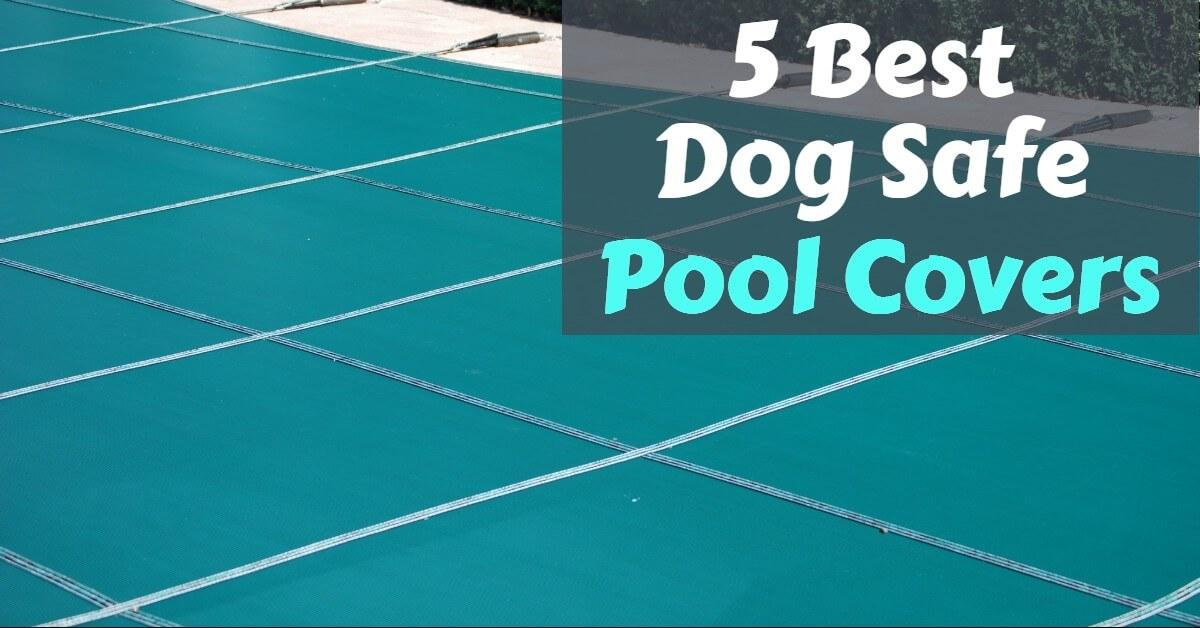 Best Dog Safe Pool Covers