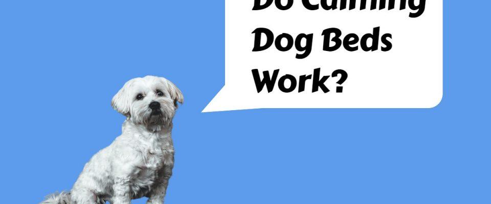 do calming dog beds work