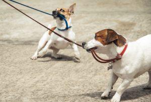 dog biting their leash