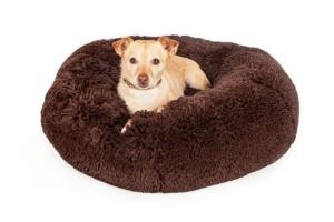 Dog on calming dog bed