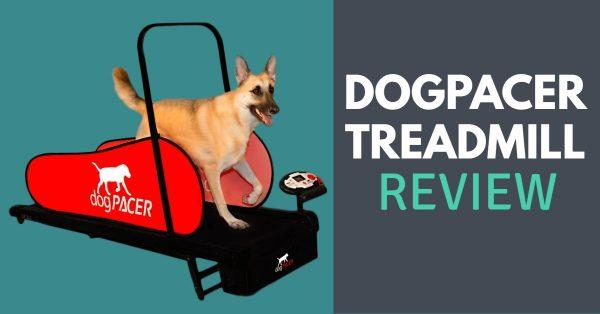 DogPACER Treadmill Review: Read Before Buying