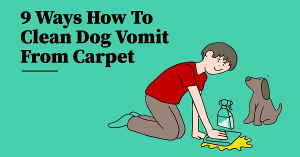 9 Ways How to Clean Dog Vomit From Carpet
