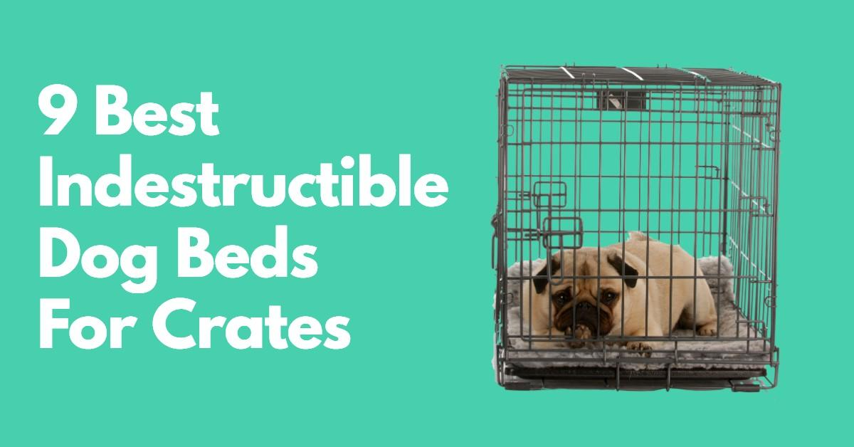 Indestructible dog beds for crates