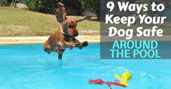 9 Ways to Keep Your Dog Safe Around the Pool