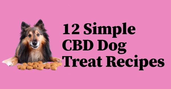 12 Simple CBD Dog Treat Recipes