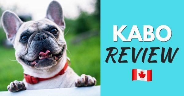 Kabo Dog Food Review: Fresh Dog Food Delivery