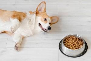 Dog near his feeding bowl