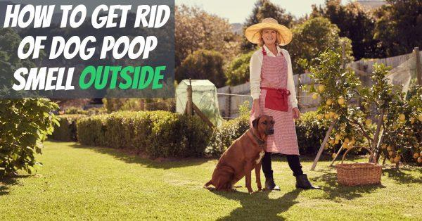 How to Get Rid of Dog Poop Smell Outside (Treatment and Prevention)