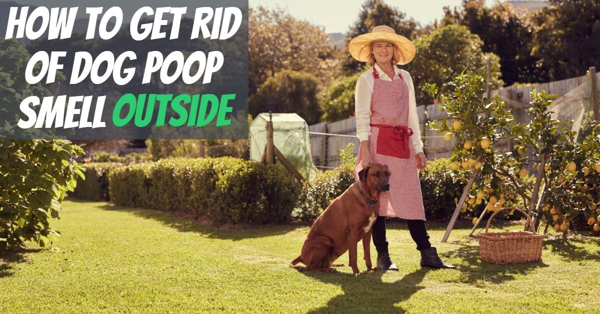 How to Get Rid of Dog Poop Smell Outside