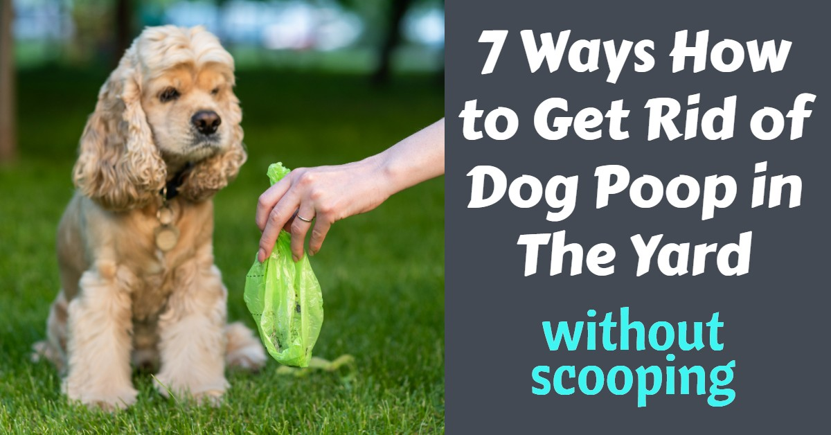 How to Get Rid of Dog Poop in The Yard Without Scooping