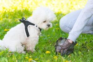 Pet owner picking up dog poop