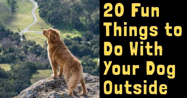 20 Fun Things to Do With Your Dog Outside