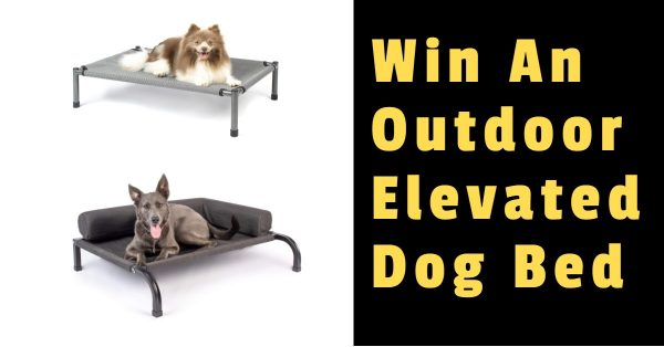 Win an Outdoor Elevated Dog Bed
