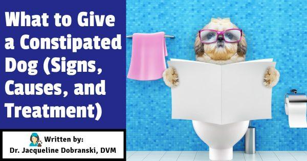 What to Give a Constipated Dog (Signs, Causes and Treatment)