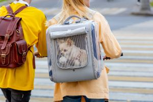 Dog Carrier Backpacks