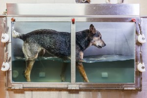Dog in a hydrotherapy clinic