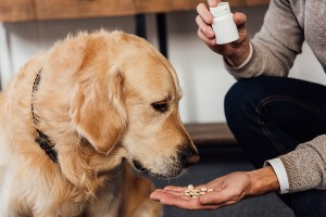 Dog taking his supplements as home remedies for dog hip pain