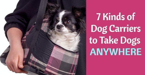 7 Kinds of Dog Carriers to Take Dogs Anywhere